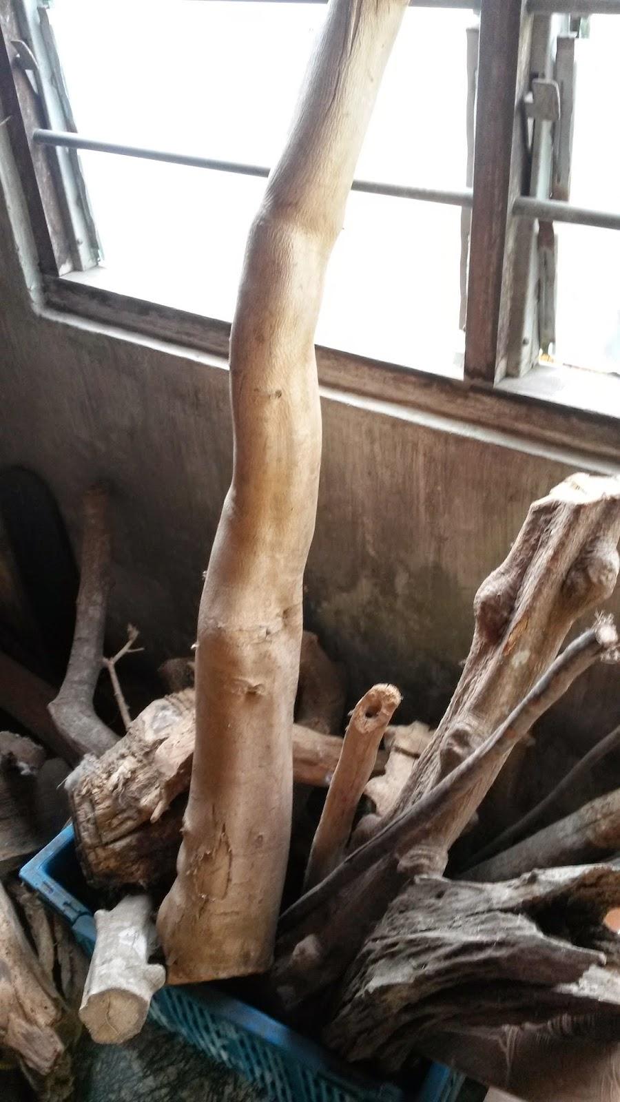 Rumah Herba & Akar kayu, resdung, tradisional medicine, tongkat ali