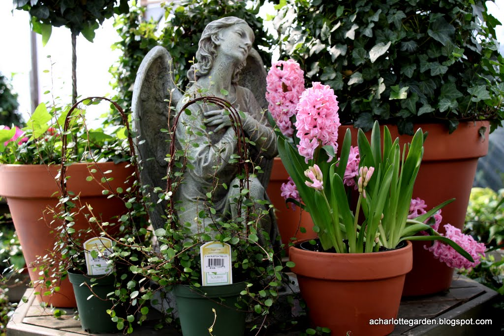 a charlotte garden Great Places to Buy Plants in Charlotte – Buy Garden Plants