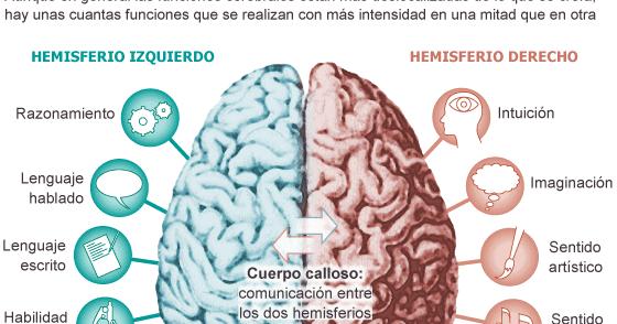 Coeduweg: Ejercicios para estimular ambos hemisferios