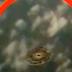 UFO πετά κάτω από αεροπλάνο (VIDEO)