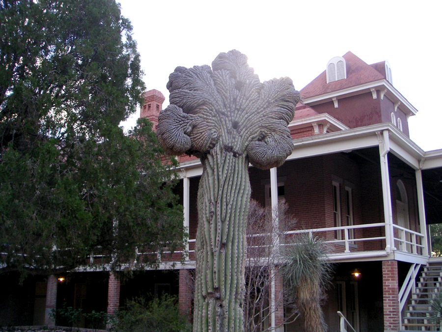 Cactus, University of Arizona, Tucson