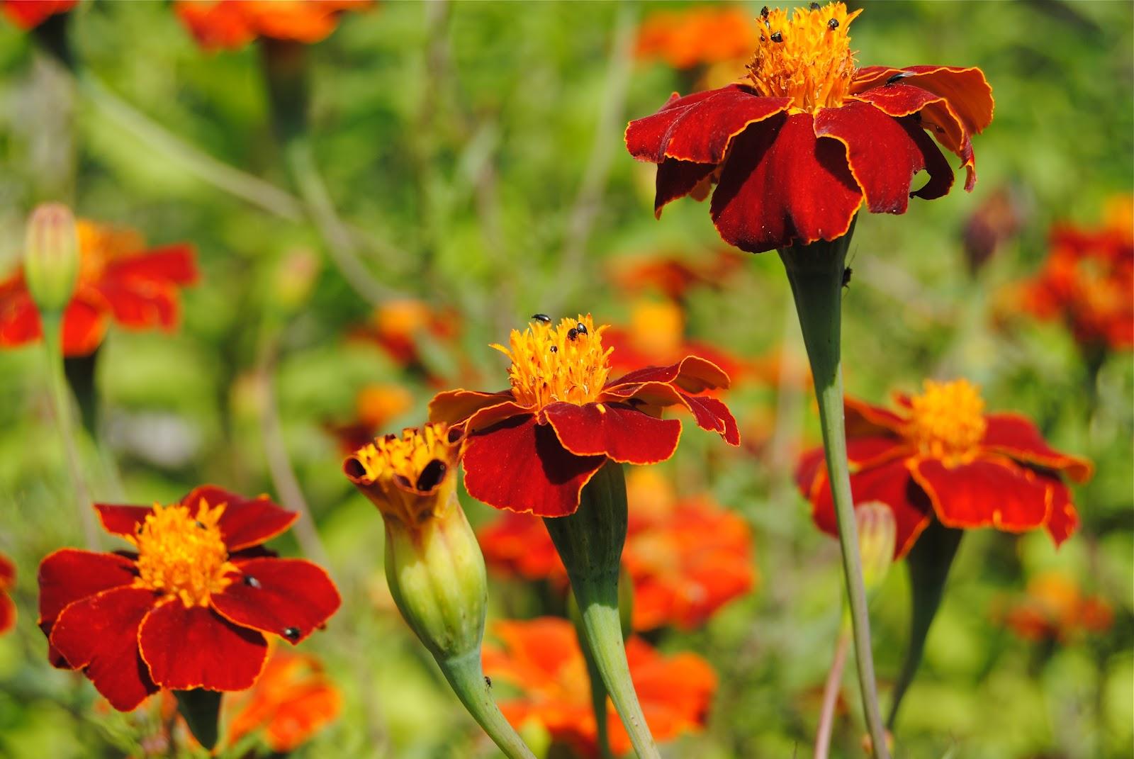 Ärligt och härligt om trädgård och natur  : september 2012