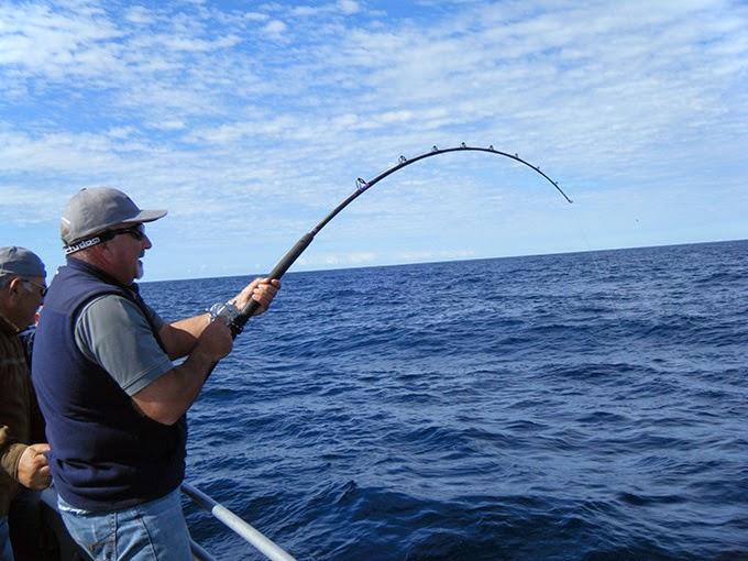 Cần câu cá Đức giá shock