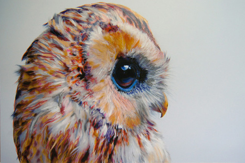 I Shall End This Week With These Jaw Droppingly Gorgeous Drawings Auckland Based Artist John Pusateri Draws Series Of Near Photo Realistic Colored Owls