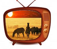 belgesel televizyonları