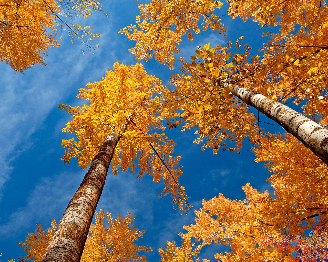fall desktop wallpaper mac