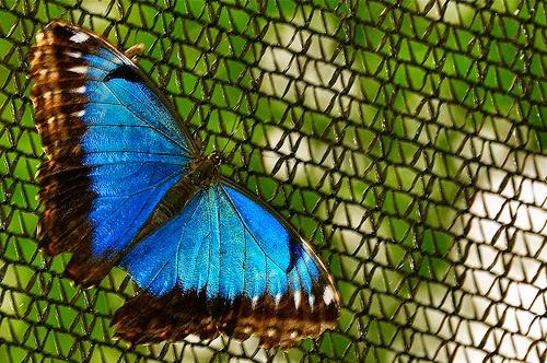 Una mariposa inspira múltiples tecnologías   SEDIN - NOTAS y RESEÑAS
