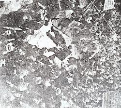 ΔεκεμβριανΑ ΤΟΥ 1944