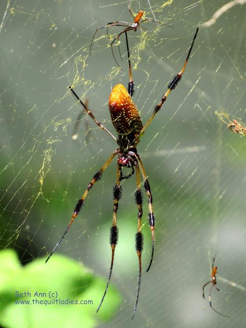 Web of Spiders by Beth Ann Strub (c)