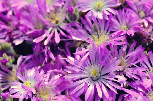 monterey ca flower