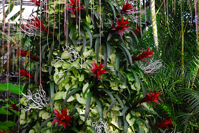 Another bromeliad tree in the Tropical Terrace