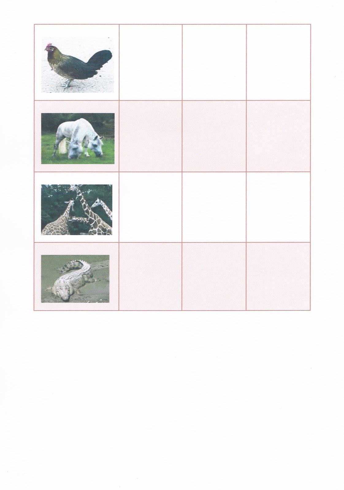 science garden year 2  worksheet  carnivore  herbivore