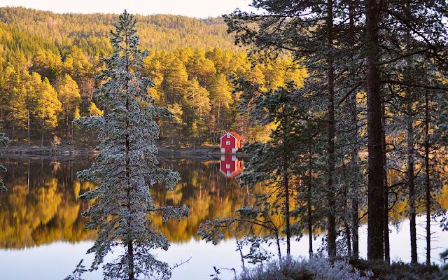 Bosque de Árboles de Pino en Otoño, Noruega