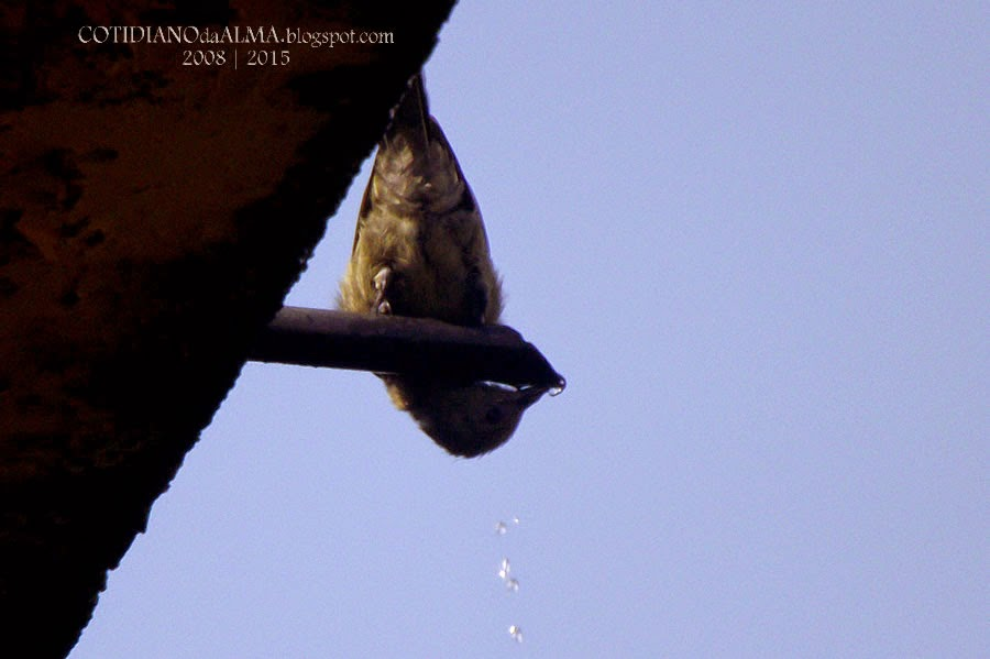 pássaro, passarinho, cotidiano da alma, Ezequiel Rodrigues