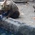 Incrível: Urso salva pássaro de afogamento