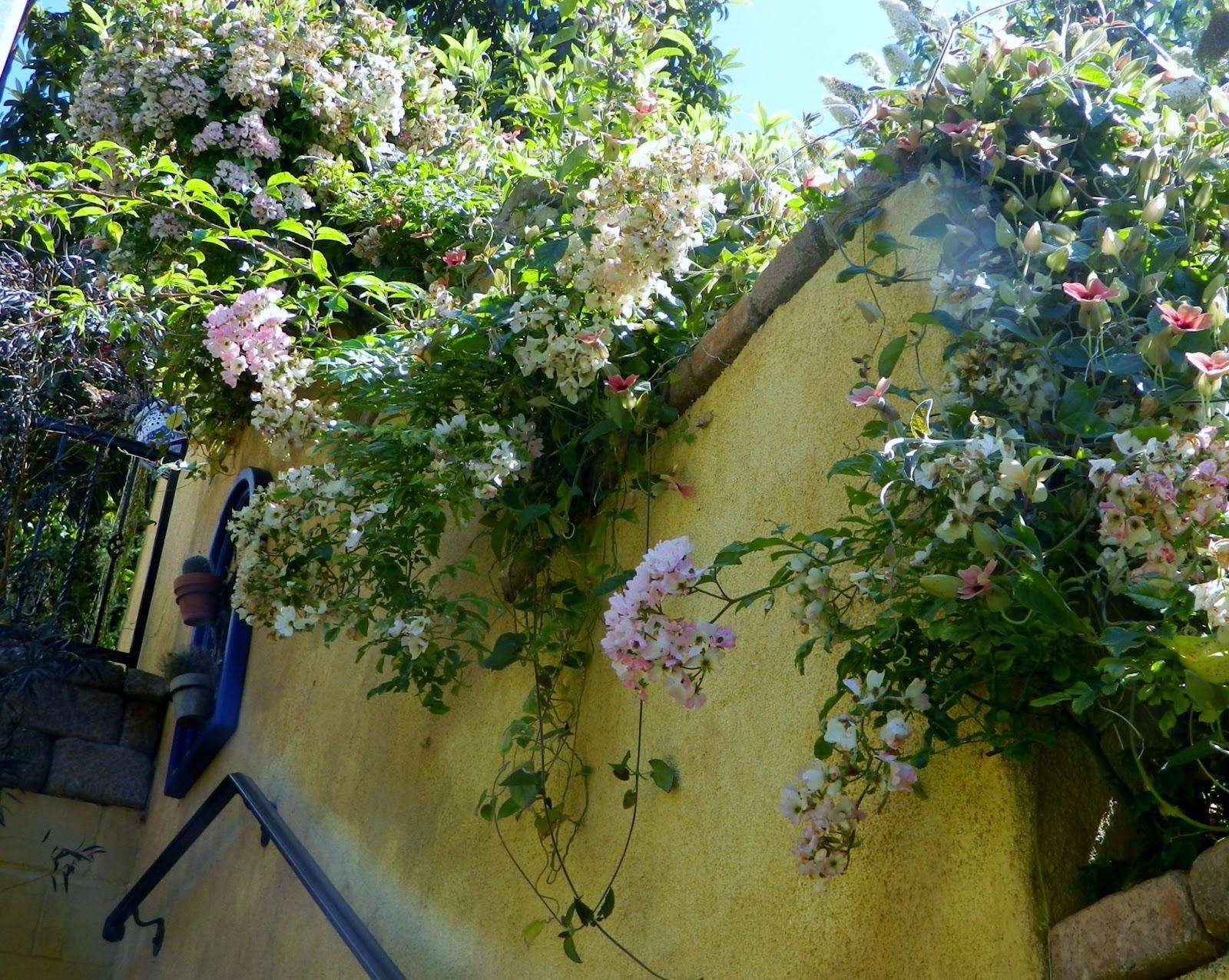 Gardenenvy Decidedly Spanish Garden Definitely In San Diego