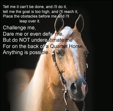 Horse Pictures With Quotes Quotes about your horse