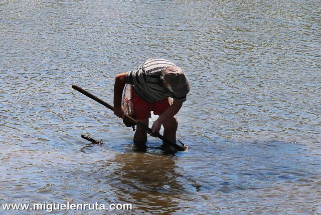 Pesca-ameijoa-Rio-Gilao-Tavira