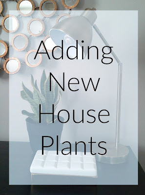 Adding New House Plants