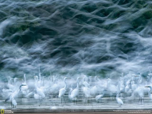 الطيور في منطقة المد والجزر لنهر الدانوب في المجر تصوير |ريكا زيسمون