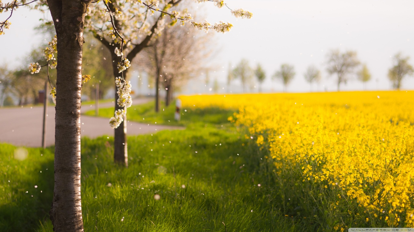Yellow Beautiful Scenery
