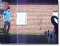 videos com gatos
