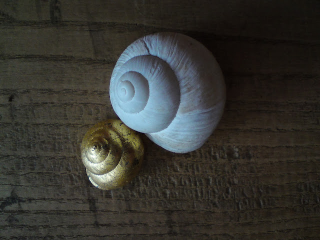 snail_shell, fotografia, światło, light, photo, spiral, gold