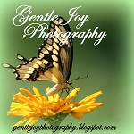Gentle Joy Photography