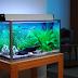 Model Auarium Ikan Hias Minimalis Terbaru