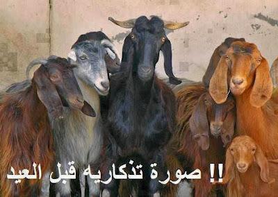 مصر,عيد الأضحى,مناسبات,أعياد,