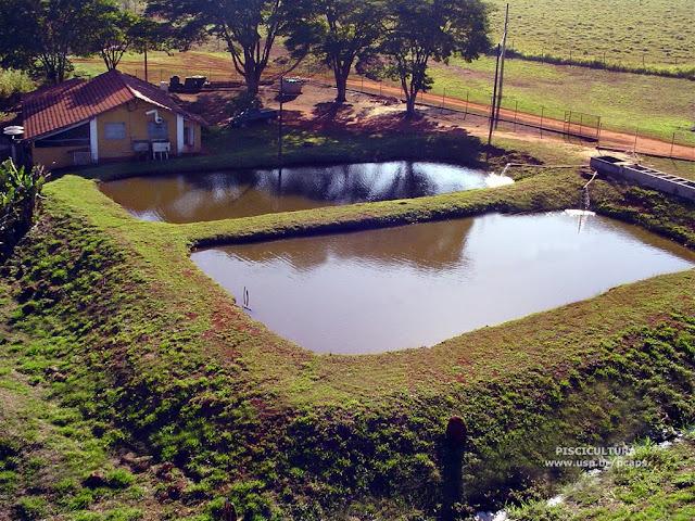 Permacultura autosuficiencia y tecnolog a piscicultura o for Criar tilapias en estanques