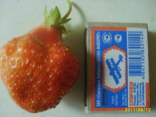 Здоровая ягода