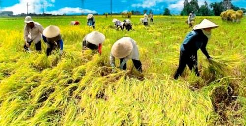 Peluang Usaha Di Bidang Pertanian Peternakan Terbaru