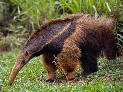 Fauna en peligro de extinción