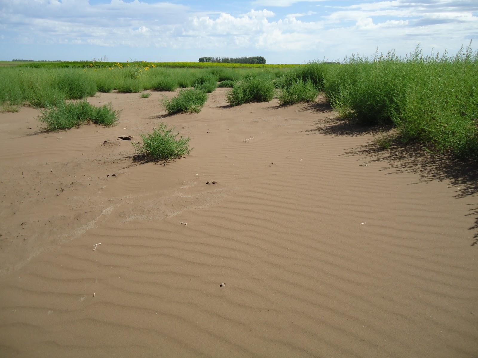 Geograf a local caso parroquia idelfonso v squez suelos for Suelos para jardines fotos
