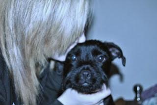 Black Border Terrier