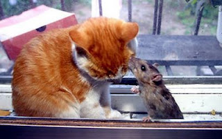 Funny Cat and Mouse