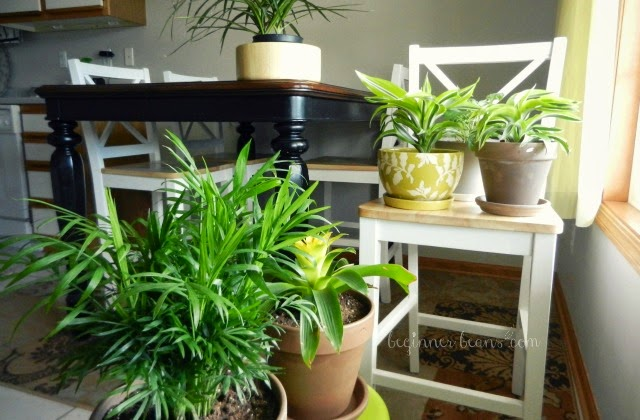 air-filtering houseplants