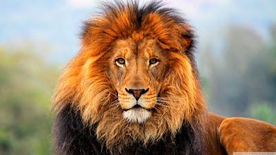 http://3.bp.blogspot.com/-39cqnQhBSPc/UTgSTDBBsHI/AAAAAAAAd58/qcCWXwj1j8g/s640/Lion+2.jpg