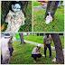 Kecoh Anak Patung Berhantu di Jumpai di Bawah Pokok (5 Gambar)