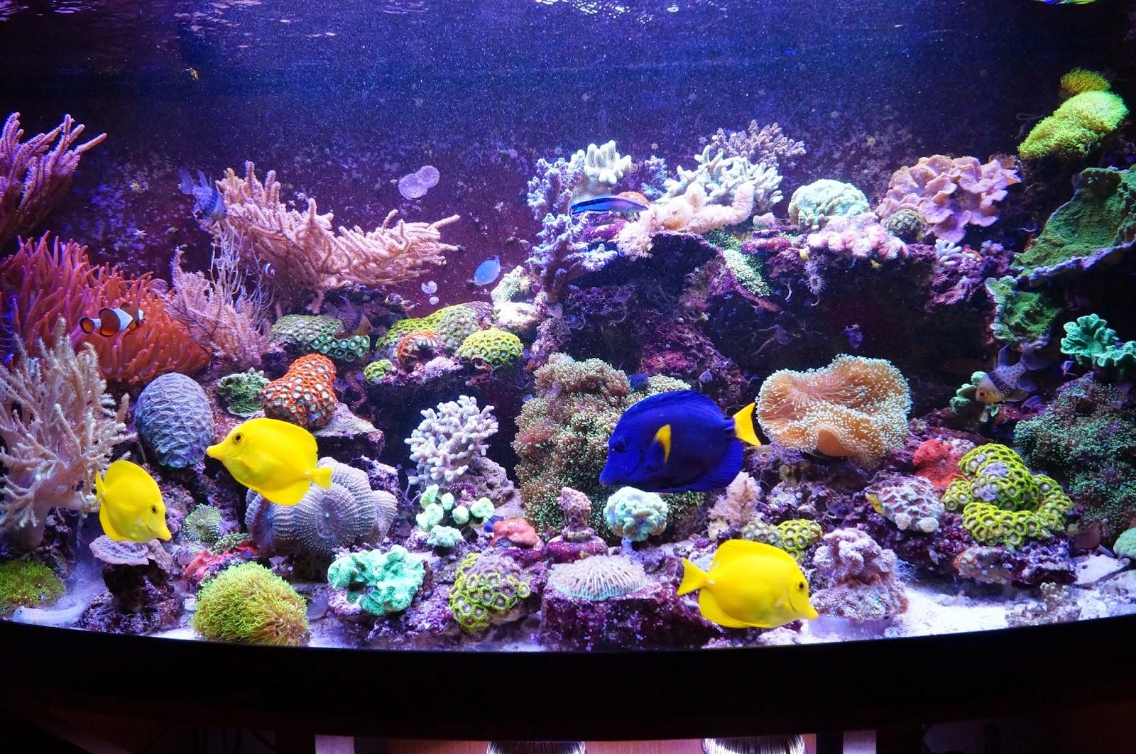 korallenableger in braunschweig meerwasser korallen ableger anemonen und ultra zoas in. Black Bedroom Furniture Sets. Home Design Ideas
