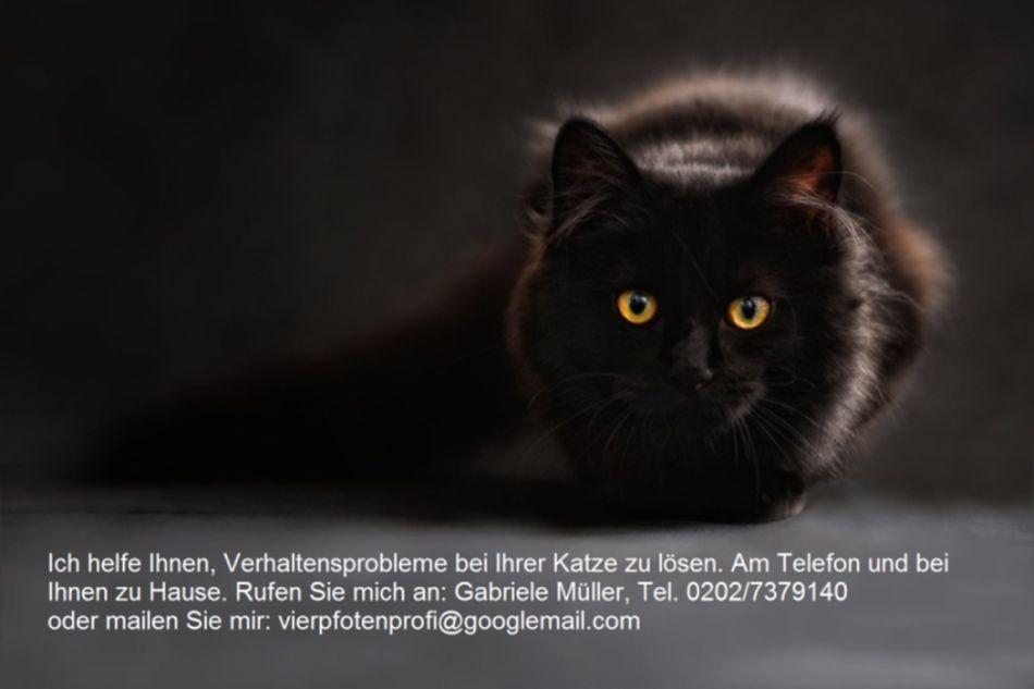 Tierpsychologie Vierpfotenprofis