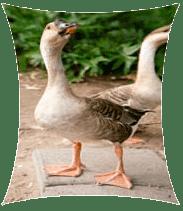 Ciencias naturales b4 tema 1 aprovechamiento de la - Que pasa si se rompe un espejo en casa ...