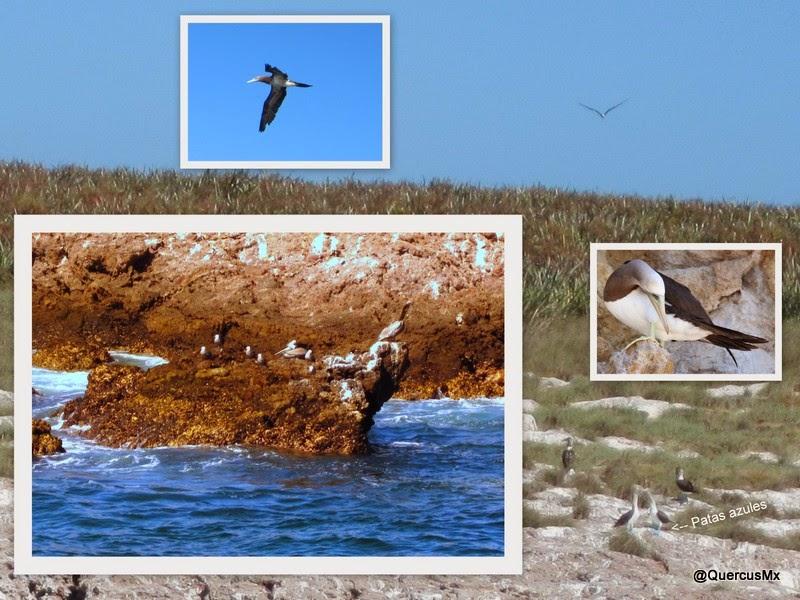 Aves de las Islas Marietas