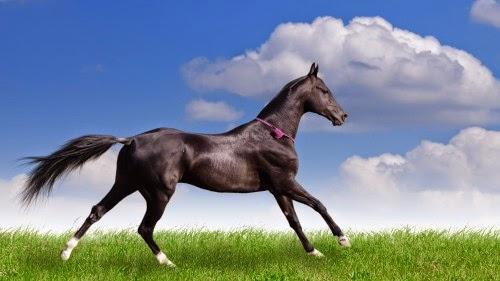 http://zoozon.blogspot.com/2014/12/black-horse-pictures-6.html