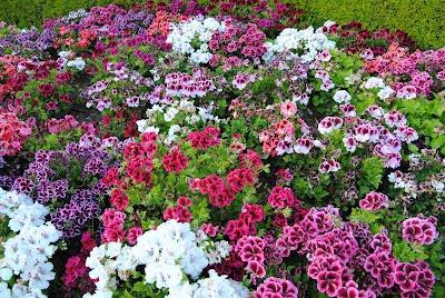 Un precioso jardín de la amistad traigo del blog de Estrella de Campoamor