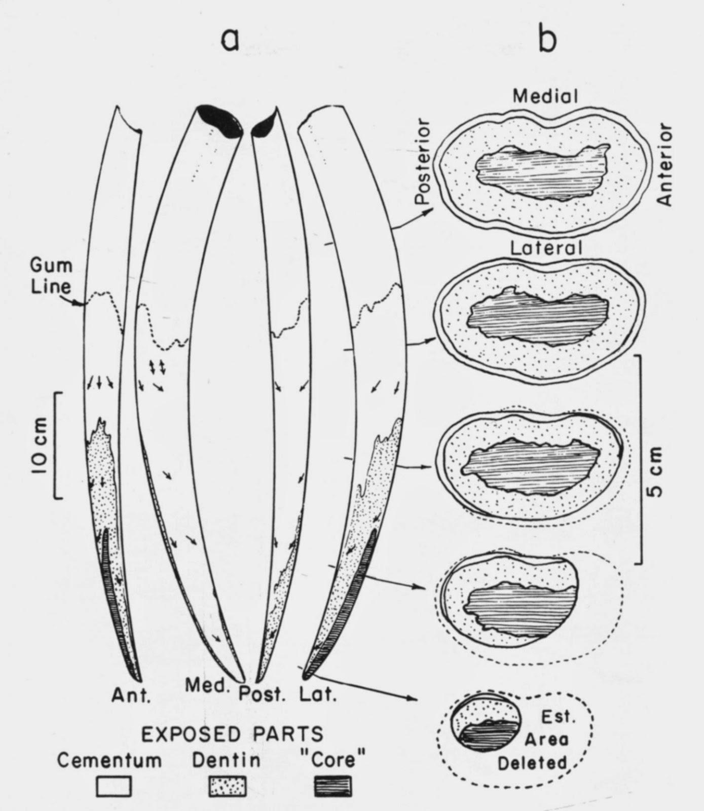 The Coastal Paleontologist Atlantic Edition The Evolutionary
