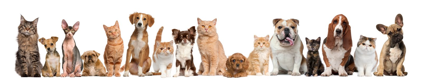 AZ PET PROFESSIONALS BLOG