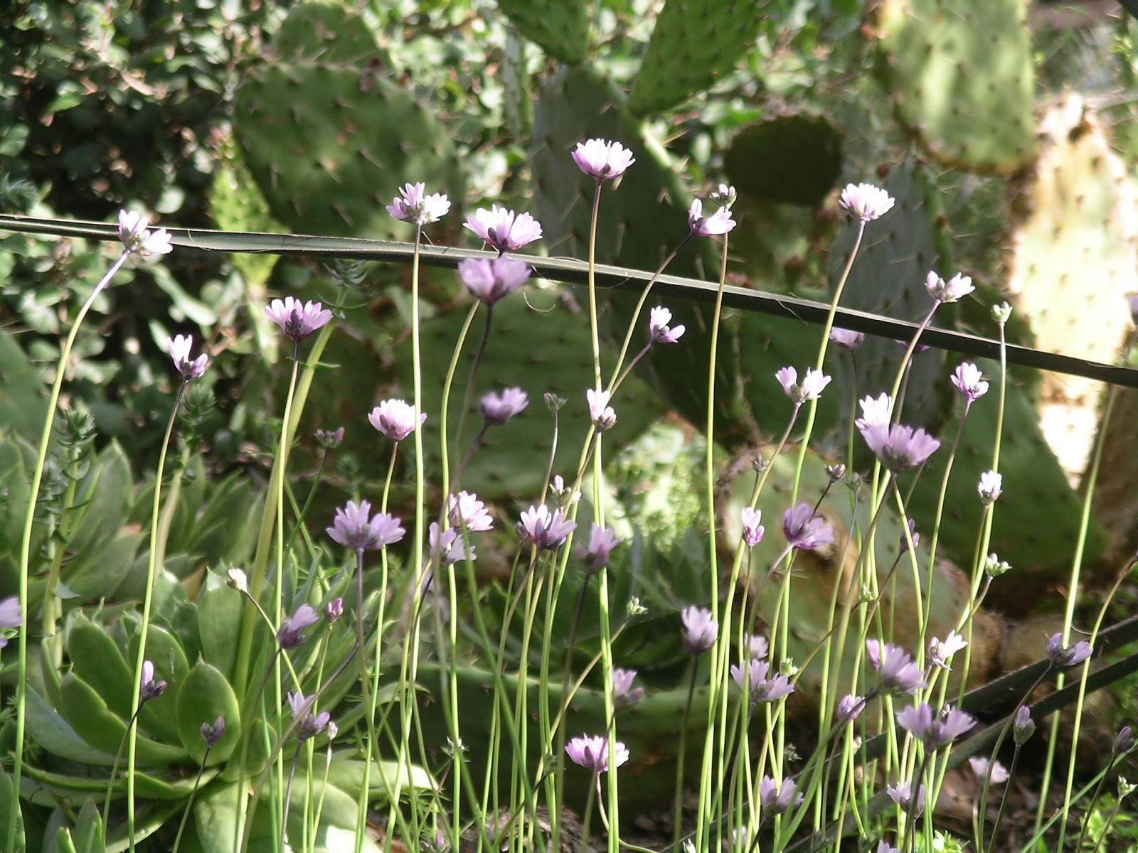 a california native plant garden in san diego county native
