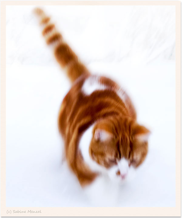 Psynopsis Cat Running in Snow Blurred